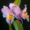 OrchidSupply.com