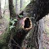 Western Oregon Wildlife Trail Cam