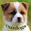 OurDogs Gr