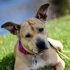 One Love Animal Rescue NJ