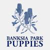 Banksia Park Puppies - Head Office