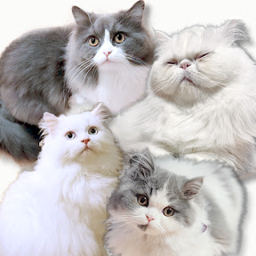 まーくんとコバと猫 YouTuber