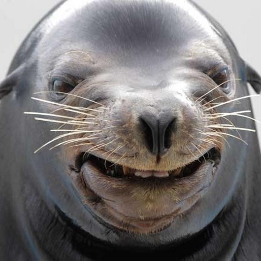 Смешные фото морских котиков