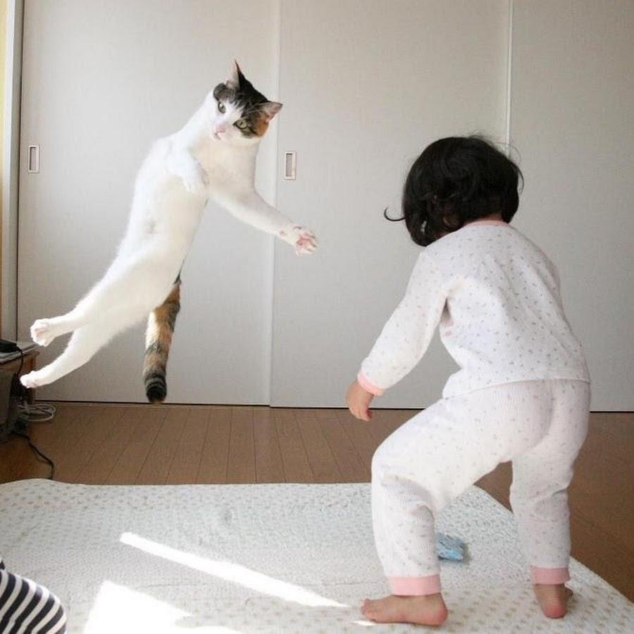 Картинки юмор коты каратисты
