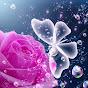 Mahbooba Rose
