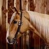 Aspen Ranch LLC