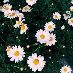 sunday . daisy Net Worth