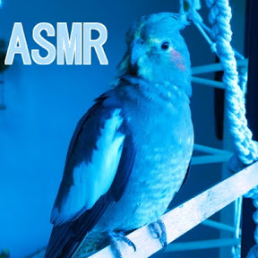 BLUE BIRD ASMR YouTuber