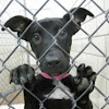 Forgotten Paws Animal Rescue - SoCal