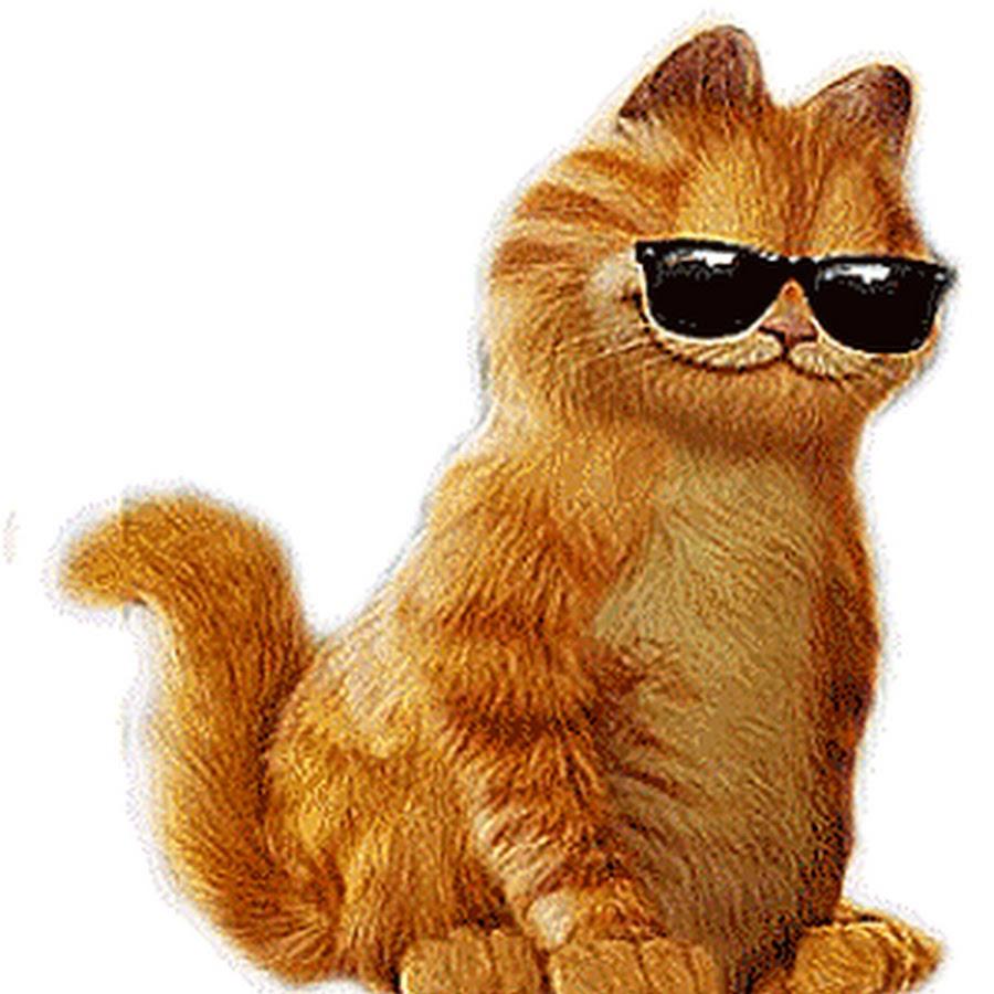 Картинки анимашки котенок, своими руками днем