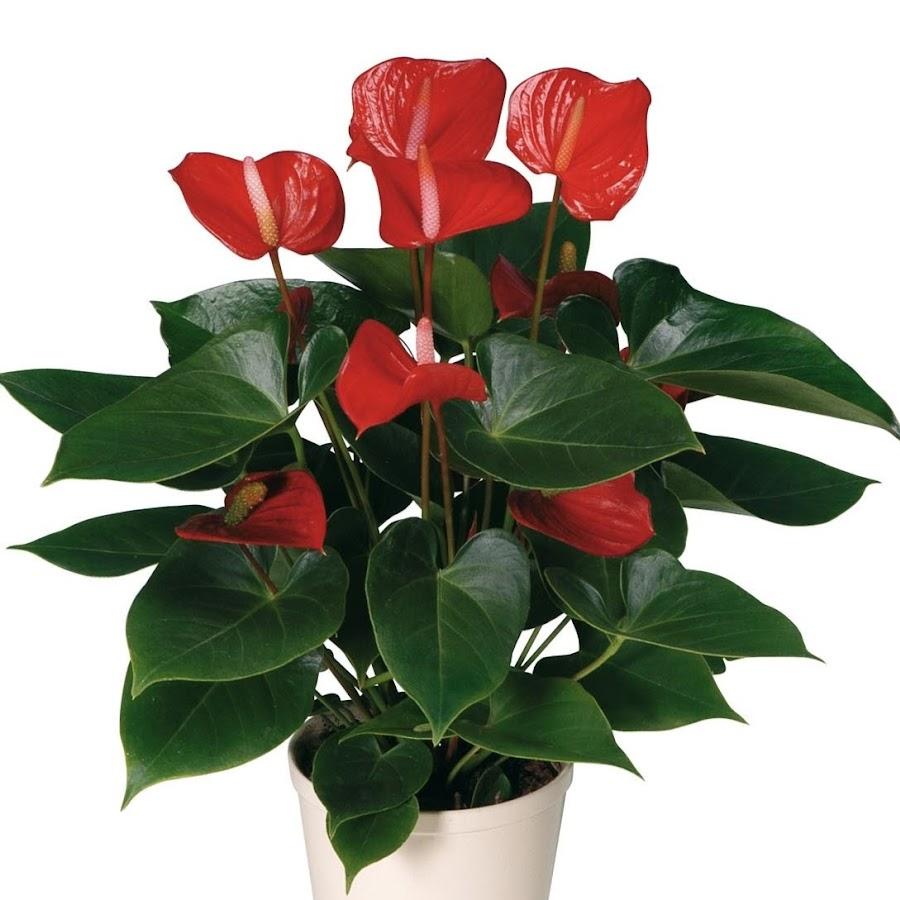 Купить цветы домашние в интернет магазине