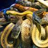 Reptile World Serpentarium