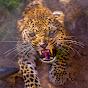 Leopard - Cheetah