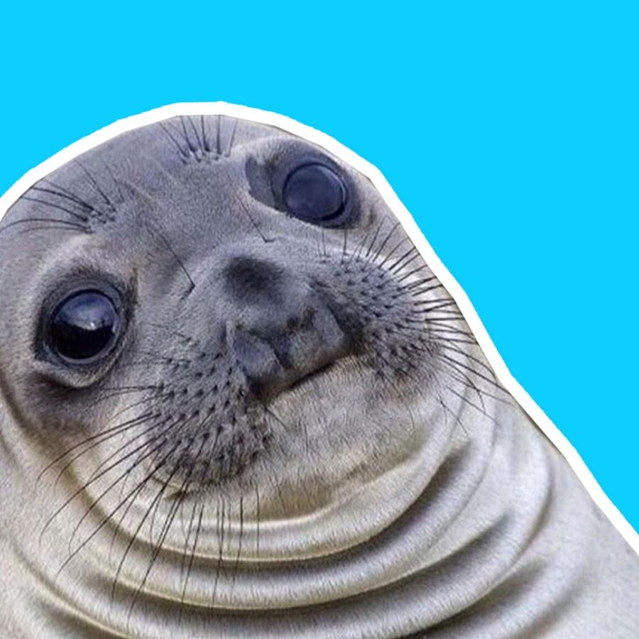 Тюлень картинки прикольные