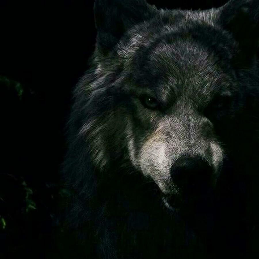 Картинки волков с надписями на аватарку, международному дню доброты
