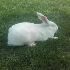hodowca królików tb