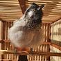 Ali ALsayad
