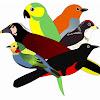 COLOMBIA Birding - Diego Calderon-F.