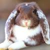 Кролики в вольере | Free range rabbits