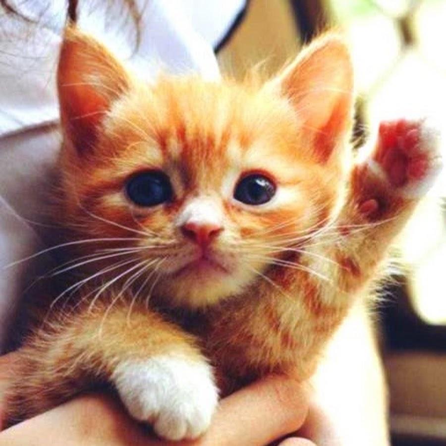 Картинки на аву коты с надписью, генеральному директору