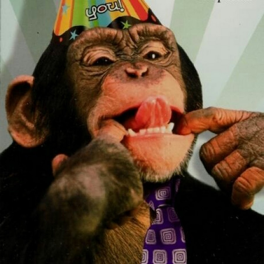 Картинки, картинки с днем рождения прикольные с обезьянами