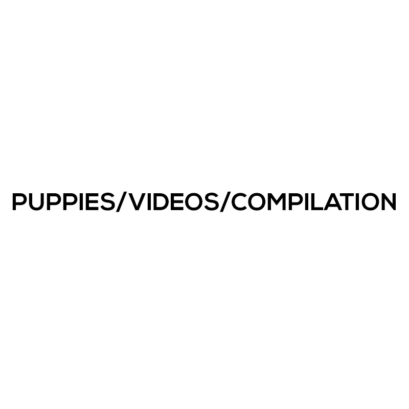 Puppies/Videos/Compilation