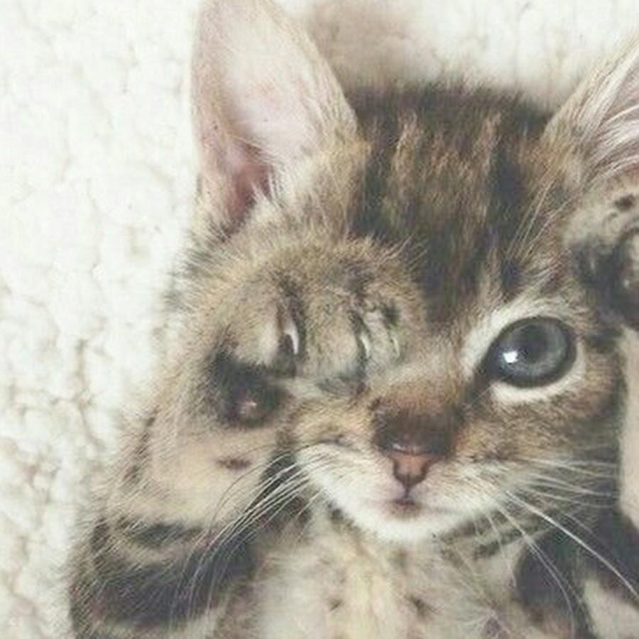 Гиф, открытки прости меня котенок