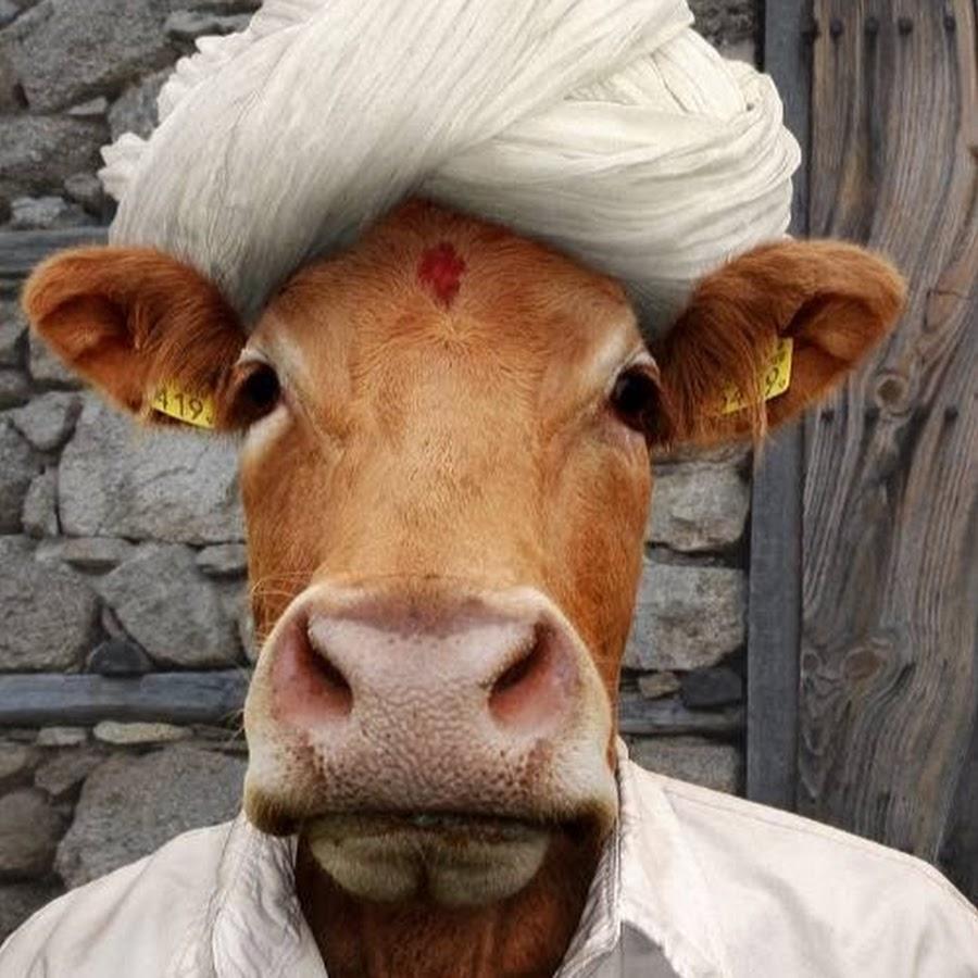 Корова смешная картинки, картинки для детей