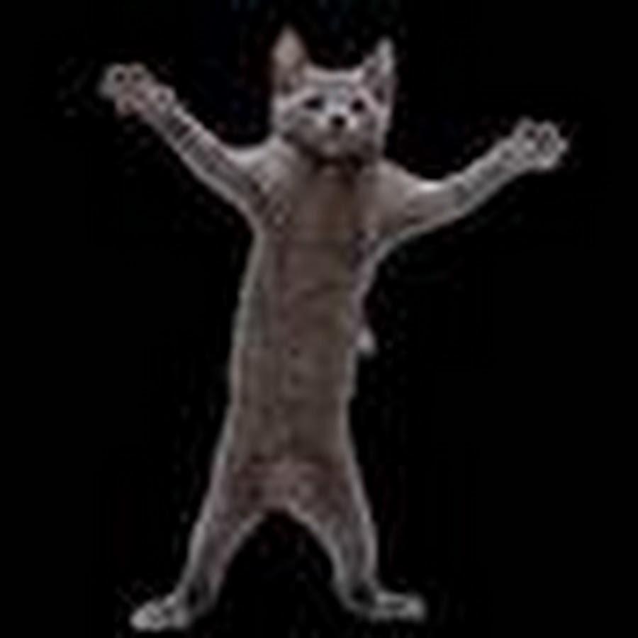 Прикольные милые, танцующий кот гифка без фона