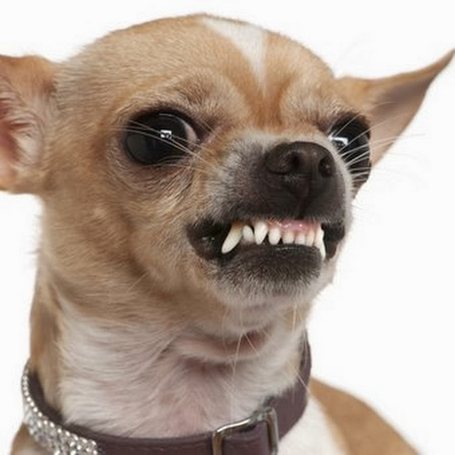 Днем рождения, злая собака фото прикол