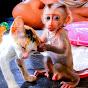 CP Monkey Daily