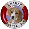 beaglerescuensw