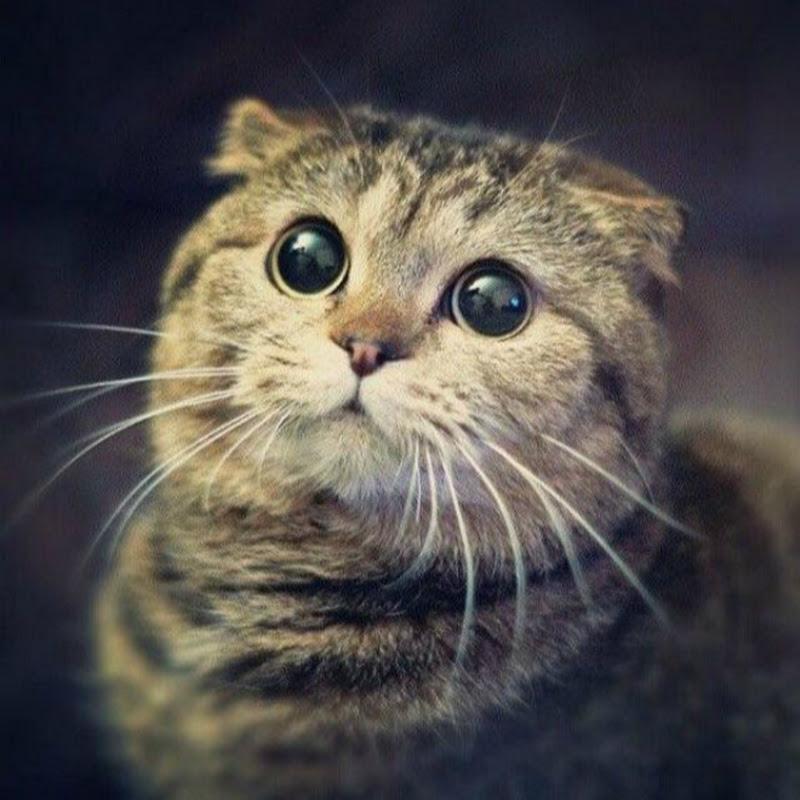 Смешная картинка с котом извини пожалуйста, защитой