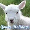 Gower Holidays