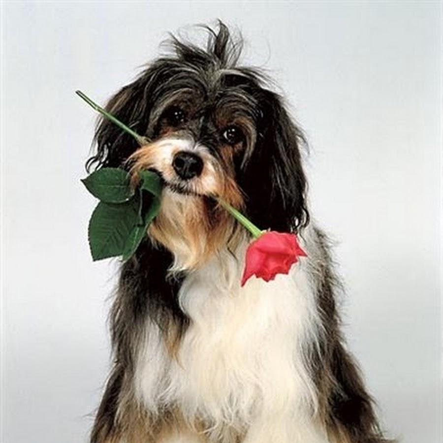 Открытки с поздравлением с собакой, днем рождения шефу
