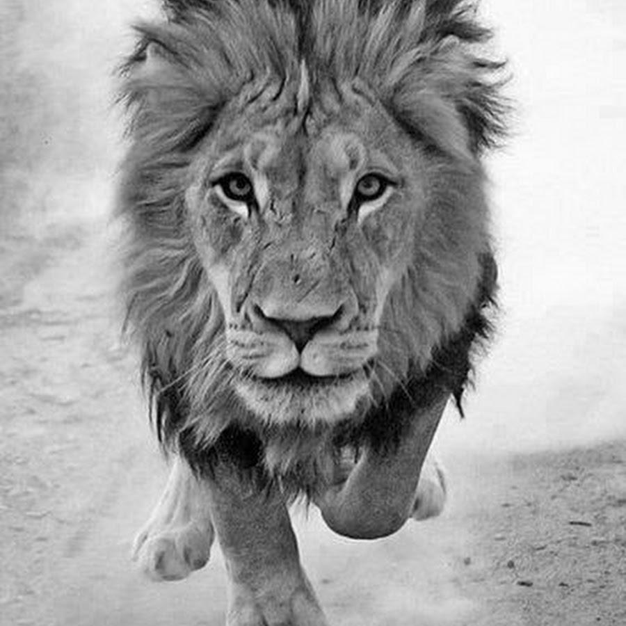 Рождеству, прикольные картинки львов на аватарку