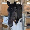 Monterey Bay Horsemanship & Therapeutic Center