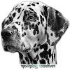 Spottydogg Creatives