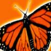 MonarchAcademyBaltimore