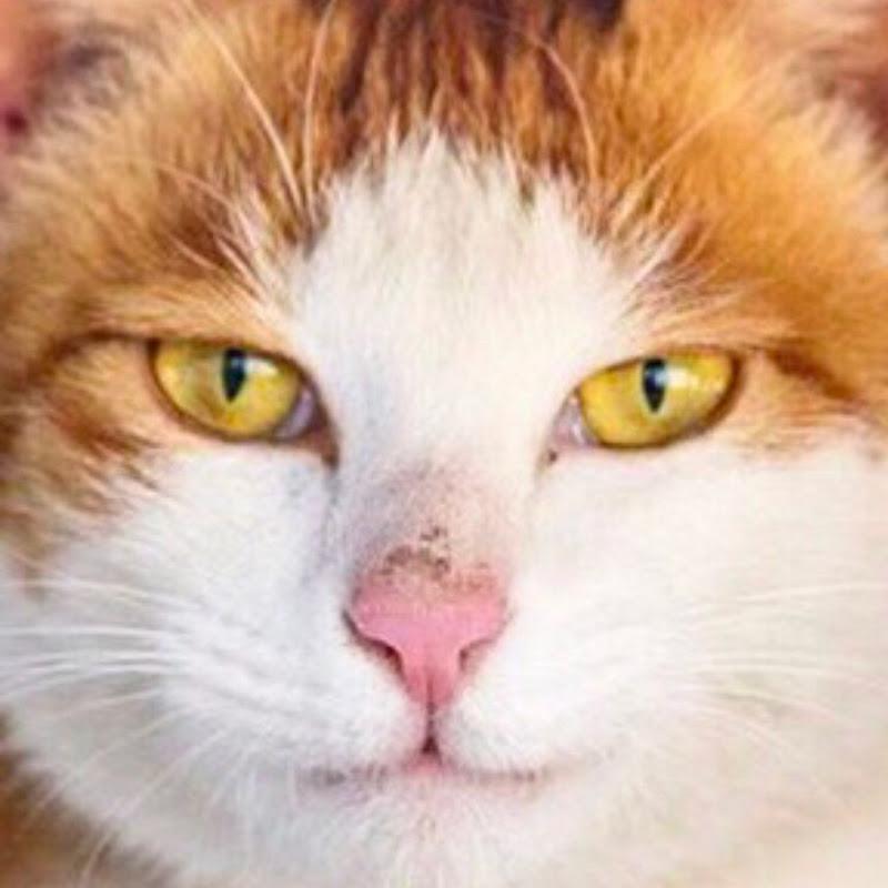 캐츠패치 쉼터[묘정] cat shelter