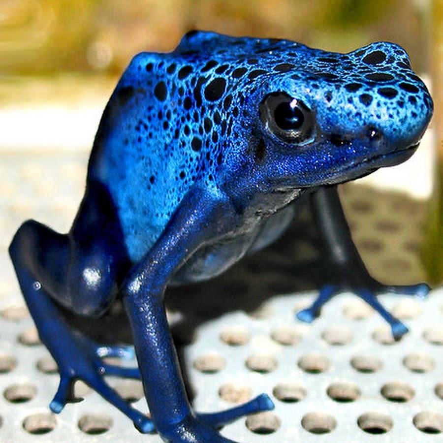 Картинки синих лягушек