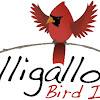 Gilligallou Bird