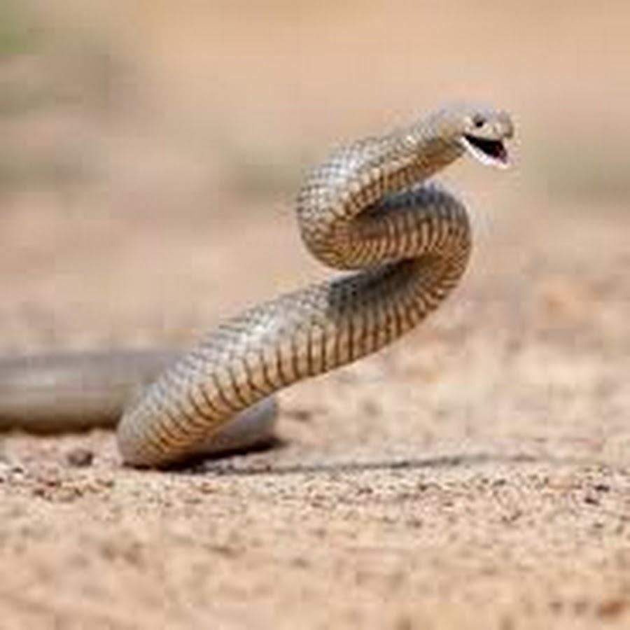 hawaii brown snakes - 1000×670