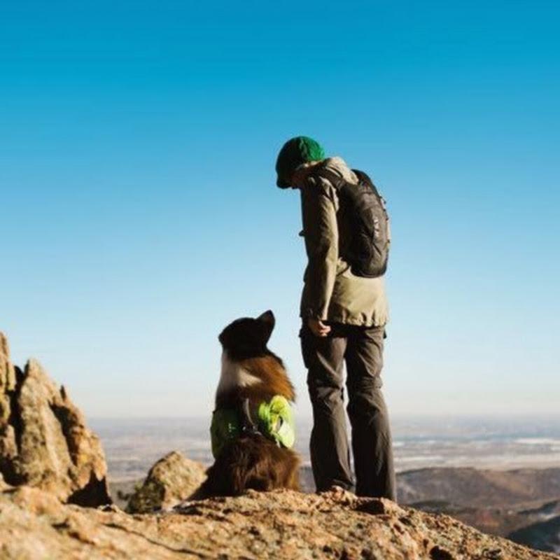 Summit Dog Training LLC