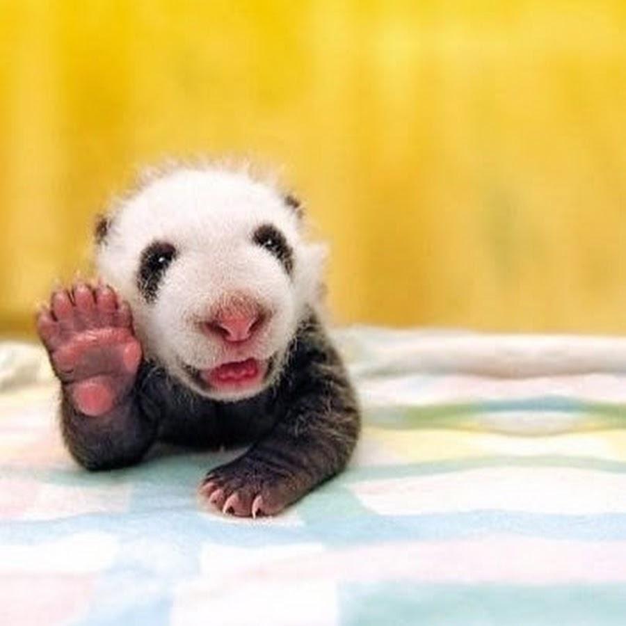 Днем, привет прикольные картинки с животными