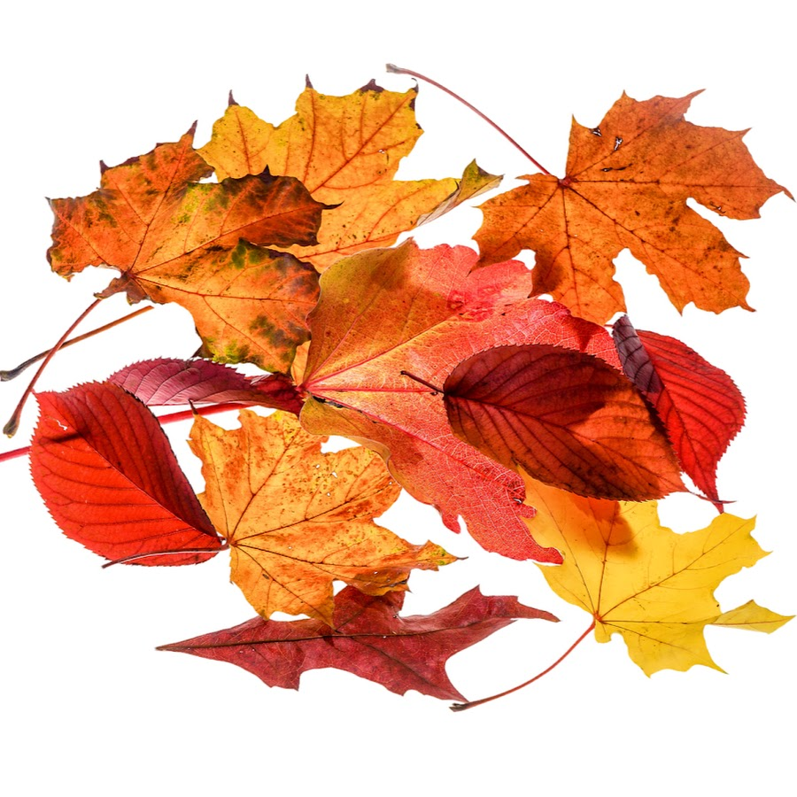 картинка для фона осень на прозрачном фоне лимонного сока