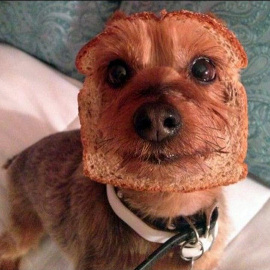 Смотреть смешные картинки до слез про собак, картинки