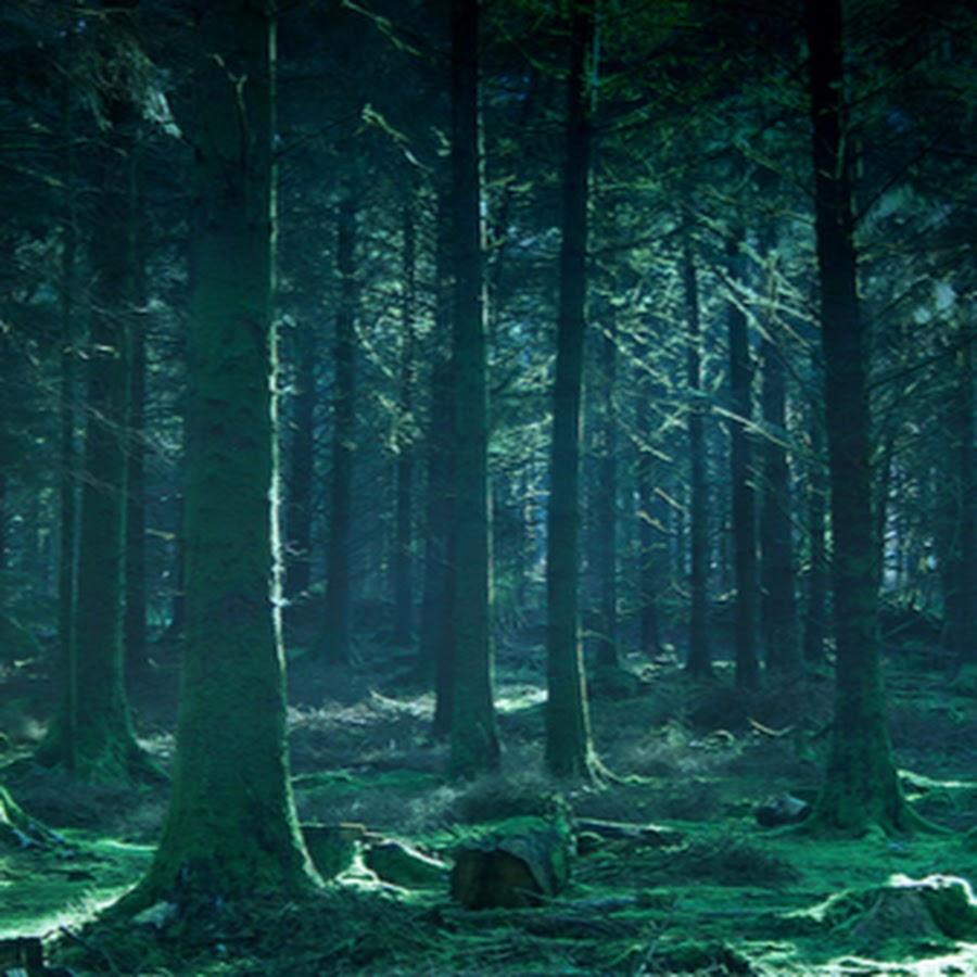 Картинка сумеречного леса