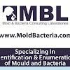 MoldandBacteriaLabs