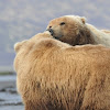 Sasquatch Alaska Adventure Co